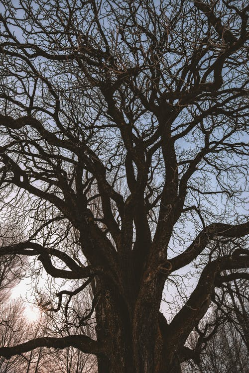 Black Leafless Tree