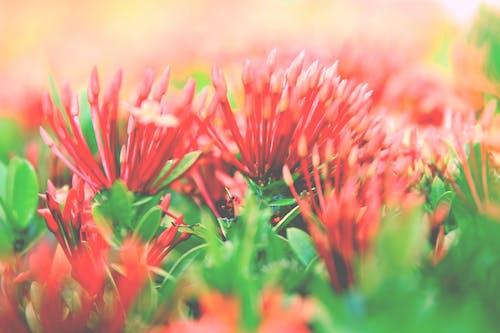 คลังภาพถ่ายฟรี ของ campo de flores, ดอกเบลล์ฟลาเวอร์, ดอกไม้, ดอกไม้สวย