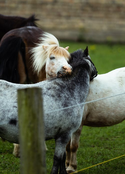 Side view of gentle horses stroking heads while grazing in paddock in agricultural farm