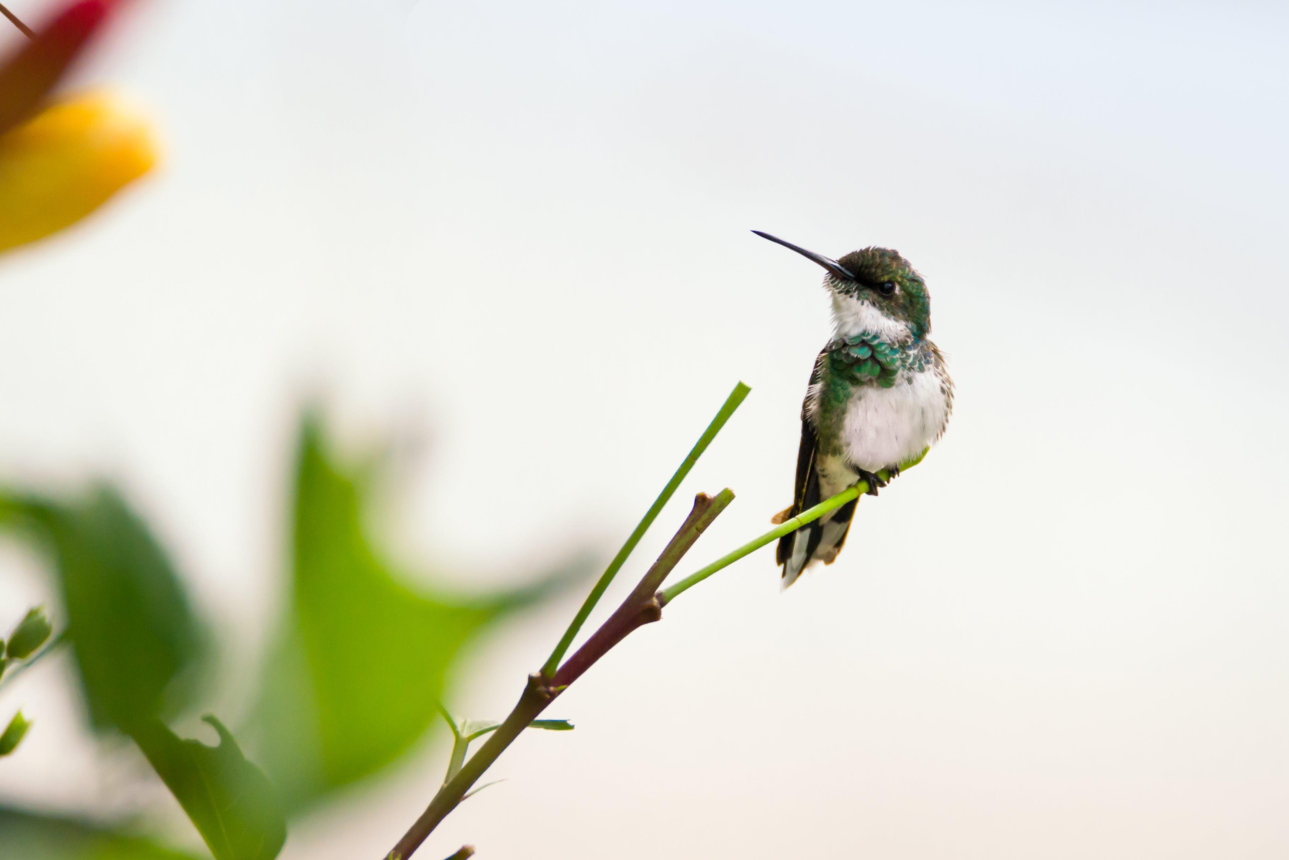 Hummingbird on Plant