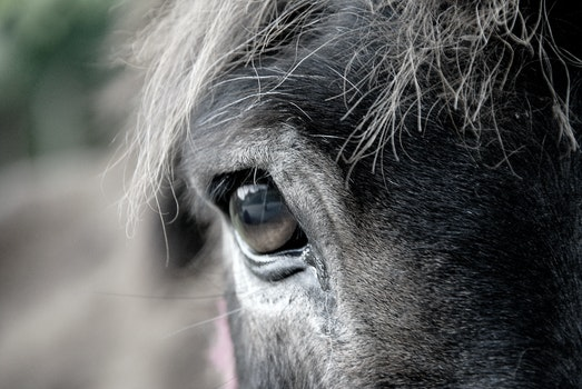 Free stock photo of animal, eye