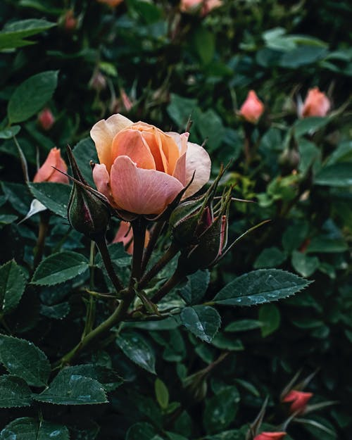 Free stock photo of beauty in nature, bloom, blooming