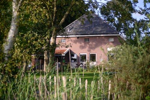 Бесплатное стоковое фото с архитектура, газон, двор, дерево