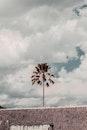 Brown Leafed Tree Under Cloudy Skies