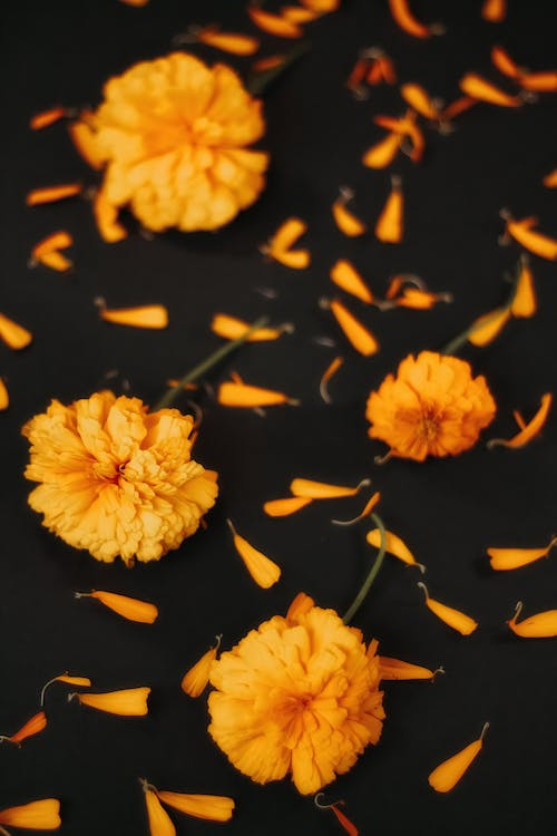 Yellow Flowers in Black Background