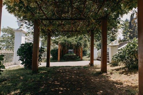 光, 光線, 公園 的 免費圖庫相片