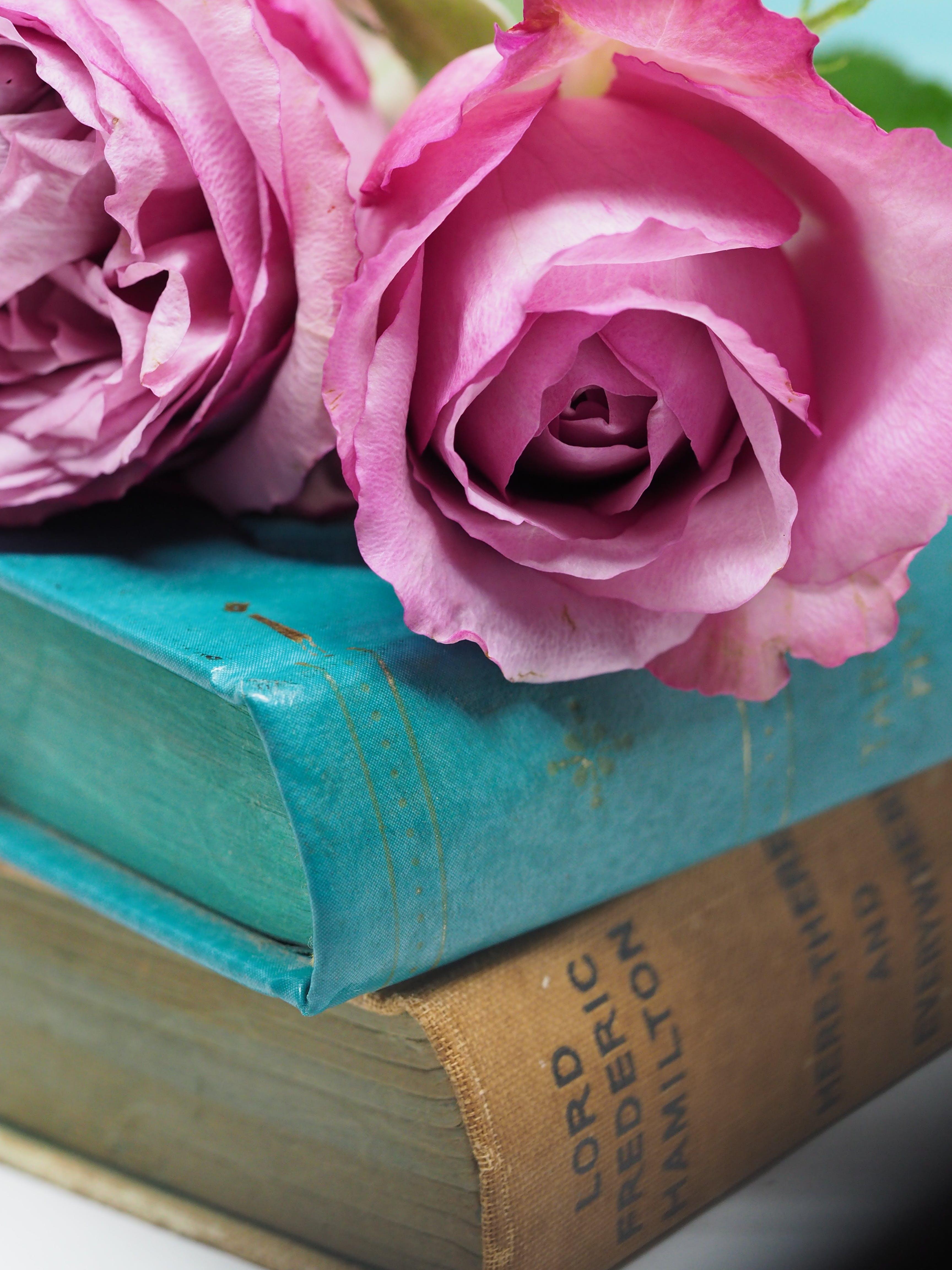 Kostenloses Stock Foto zu blumen, blütenblätter, bucheinbände, duftend