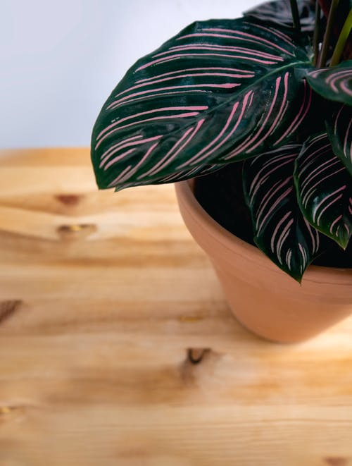 Green and White Plant on Brown Clay Pot