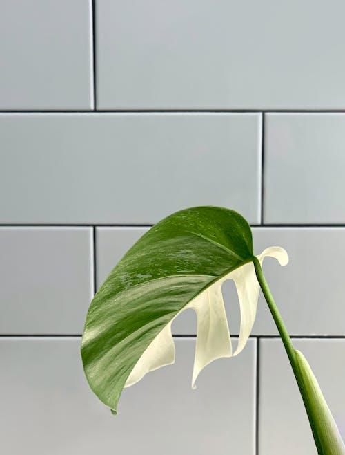 Green Leaf Plant Near White Wall Tiles