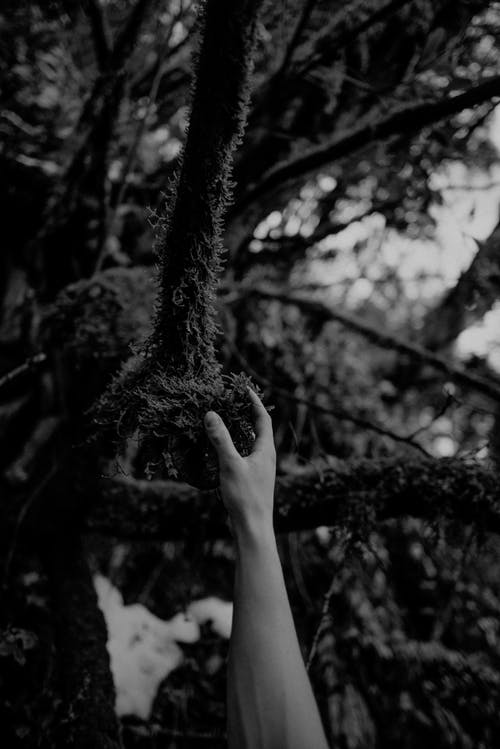 ağaç, ahşap, bakir bölge içeren Ücretsiz stok fotoğraf