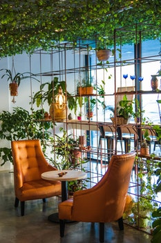 Photography of Table And Chairs Near Plants