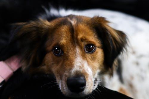 Fotos de stock gratuitas de animal doméstico, canino, de cerca