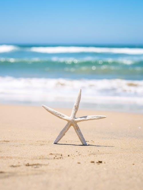 동물, 모래, 바다의 무료 스톡 사진