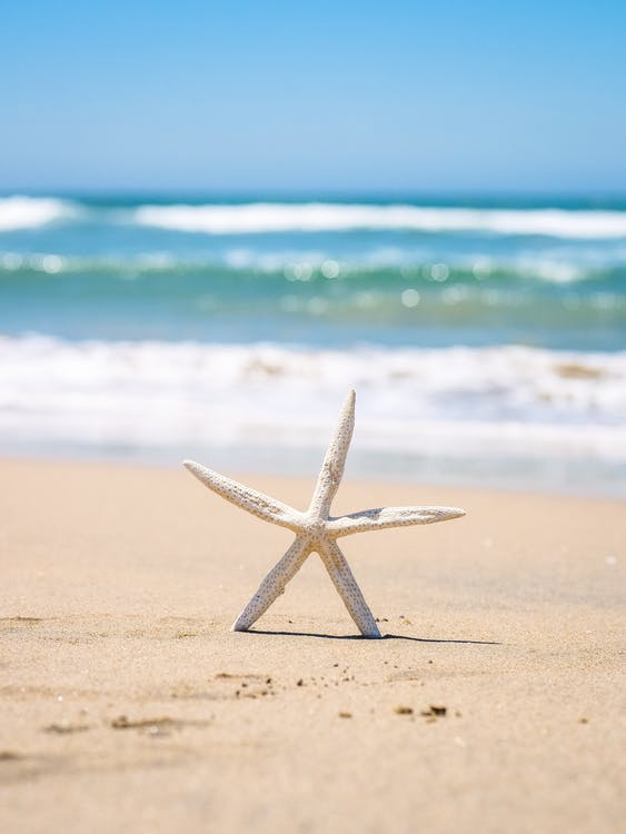Selective Focus Photo of a White Starfish on the Sand