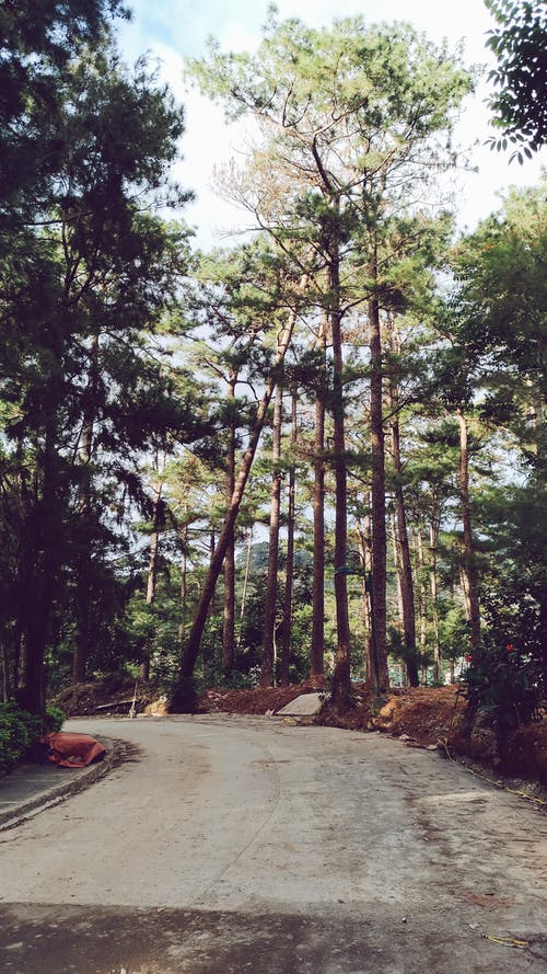 Free stock photo of Baguio landscape, nature, pine trees