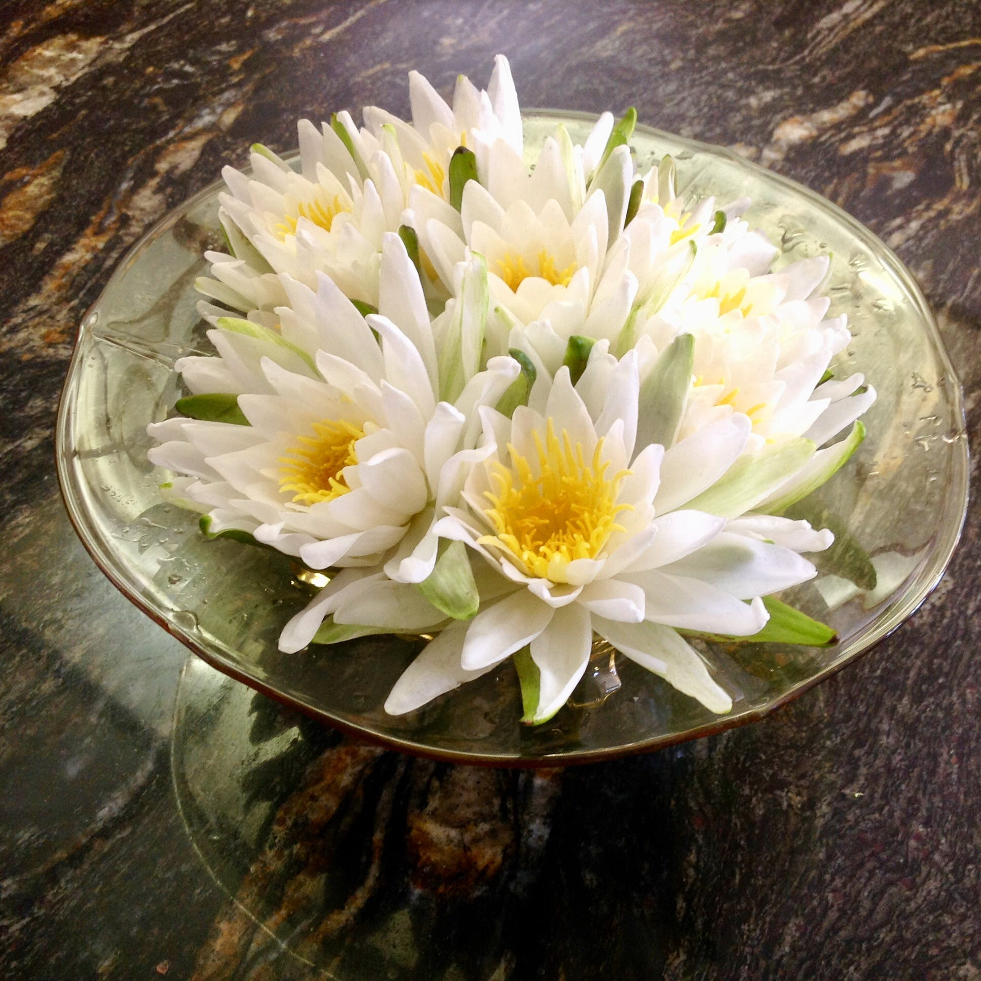 Free stock photo of Water Lillie's in bloom. Bowl of flowers