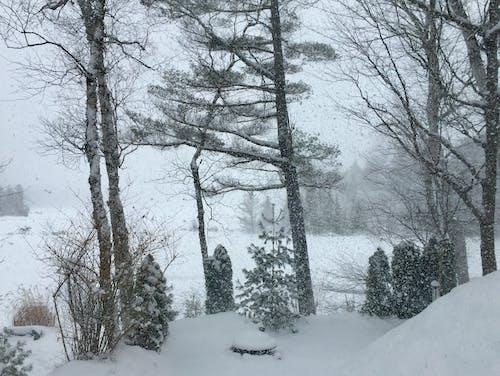 karlı gün. kış manzarası kış aylarında çam ağaçları içeren Ücretsiz stok fotoğraf