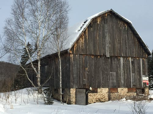 Free stock photo of old barn barn and birches