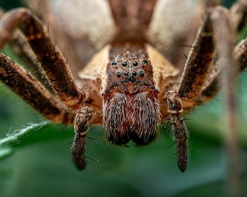 Brown Spider on Green Leaf
