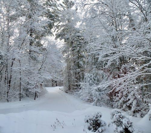 Бесплатное стоковое фото с зимний пейзаж, снежная дорога, снежные деревья