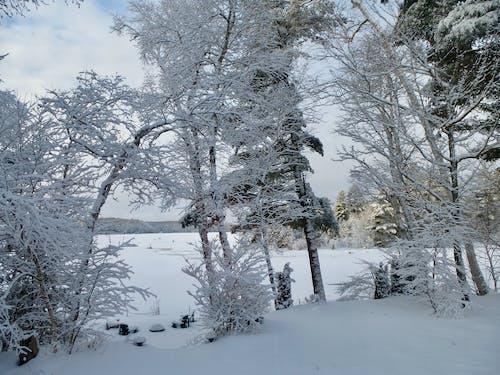 Бесплатное стоковое фото с зимний пейзаж, снег на деревьях