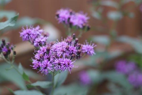 Fotos de stock gratuitas de flor, hierba