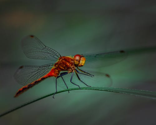 Close Up Shot of a Dragon Fly