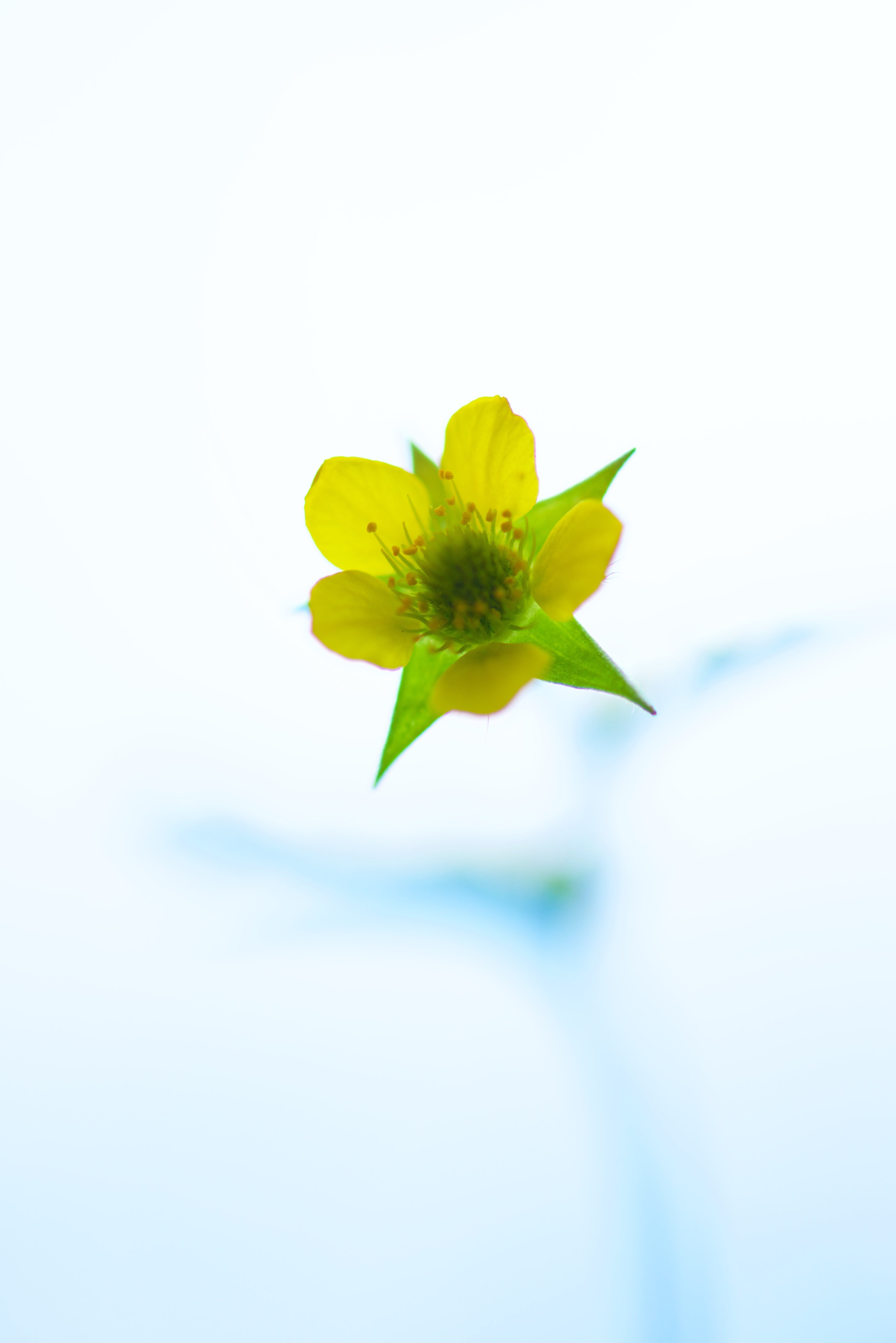 Green and Yellow Petaled Flower