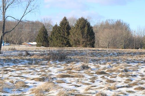 Darmowe zdjęcie z galerii z drzewo, natura, przeziębienie, śnieg