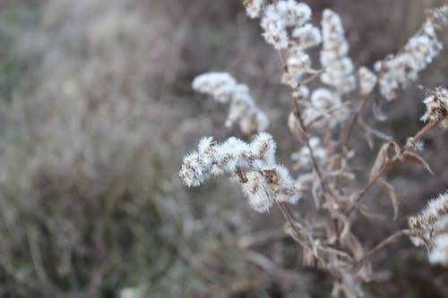 Darmowe zdjęcie z galerii z bliski, góra, kwiat, natura