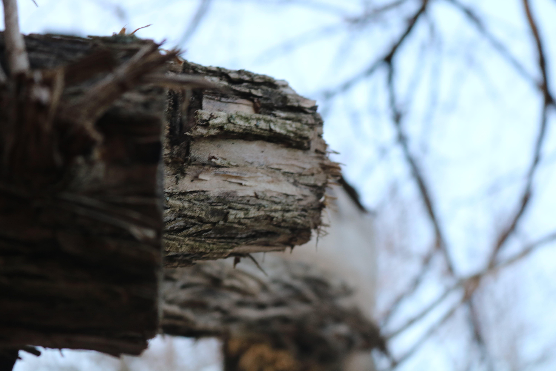 Free stock photo of nature, tree, wood
