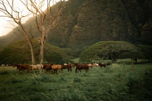 Wild horses grazing in nature near green mountains in sunlight