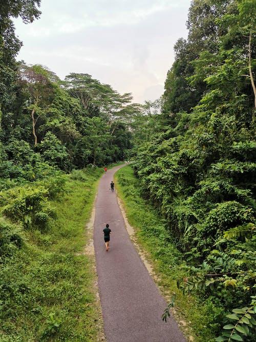 Free stock photo of walking trail