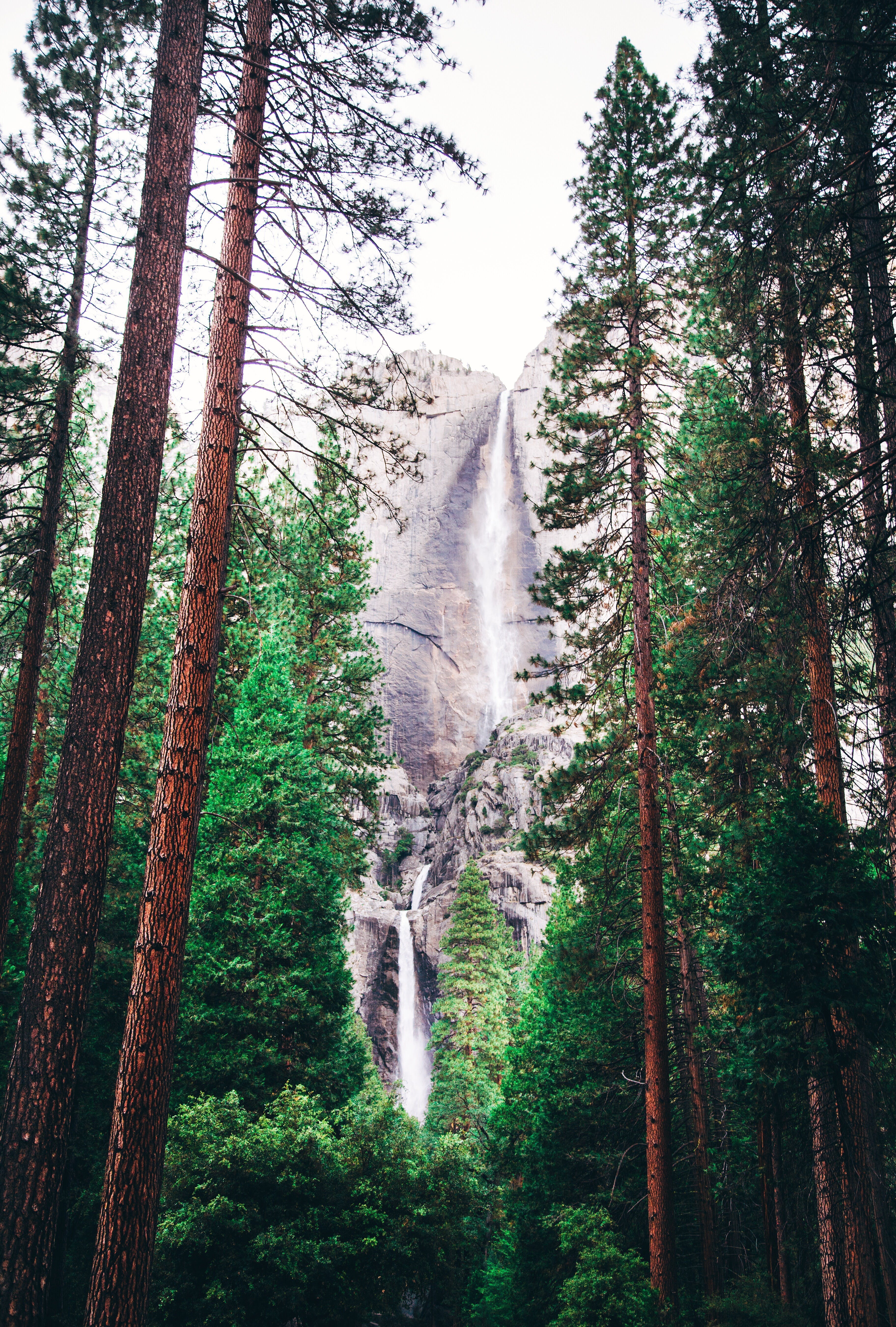 Landscape Photography of Green Trees and Water Falls