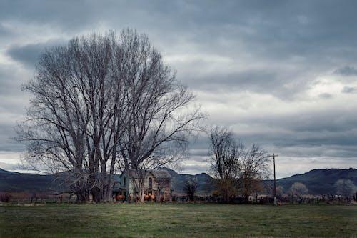 가을, 겨울, 경치의 무료 스톡 사진