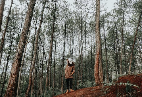 Free stock photo of asian girl, autumn forest, forest