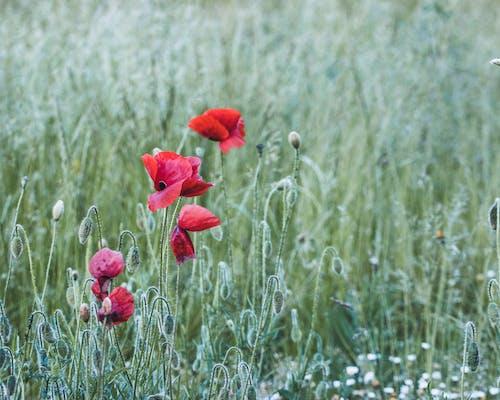 Red Flower on Brown Grass Field