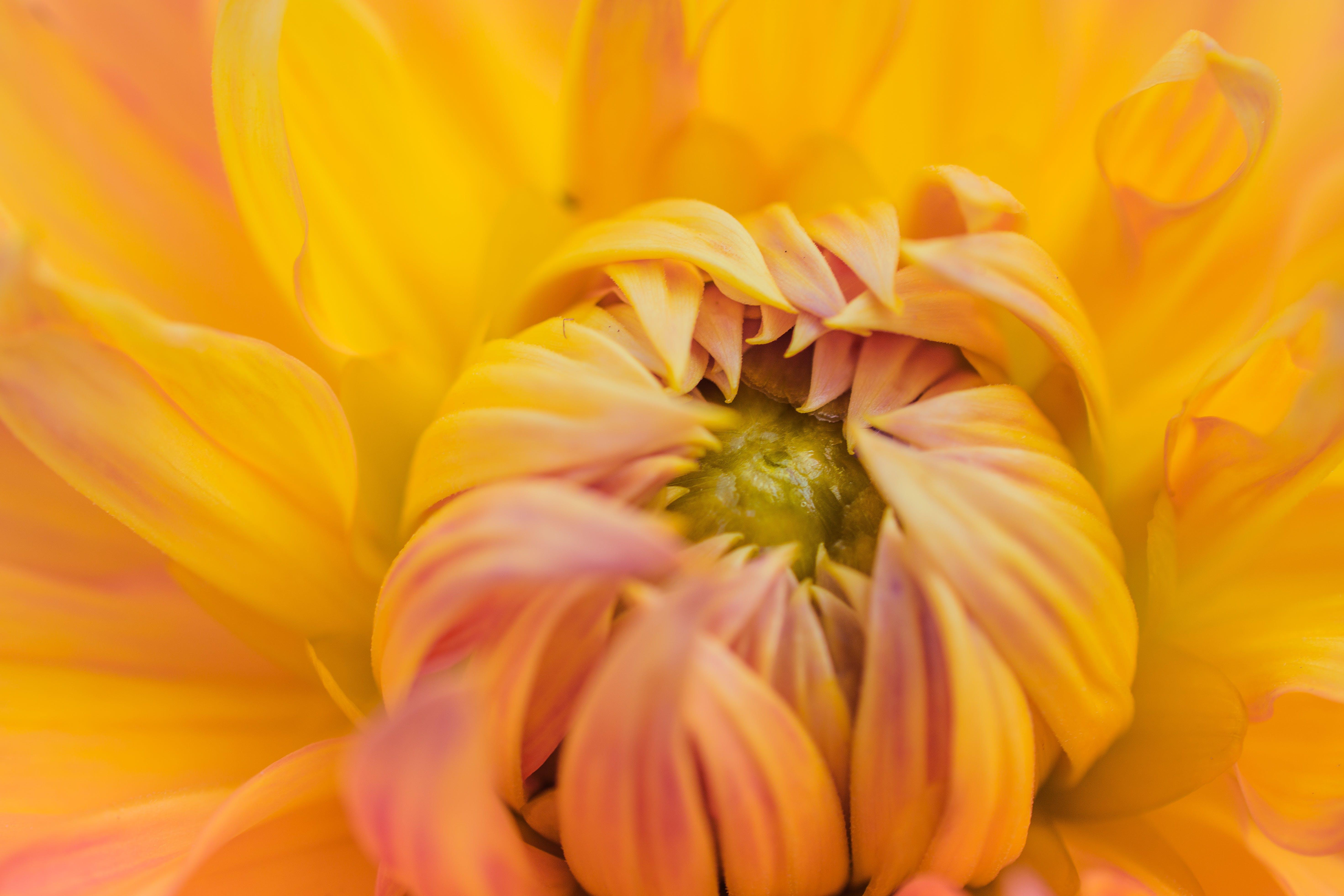 Orange Petaled Flower Plant