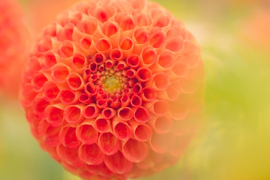 Close-Up Photography of Orange Dahlia Flower