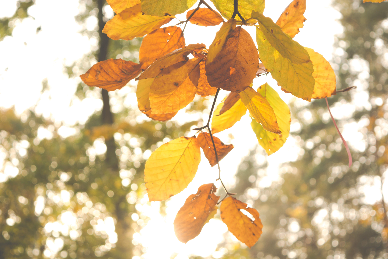 Fotos de stock gratuitas de bonito, brillante, color, colores de otoño