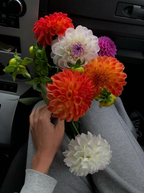 Person Holding Red White and Yellow Flower Bouquet