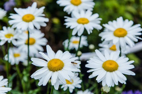 Close-Up Shot of White and Yellow Flowers