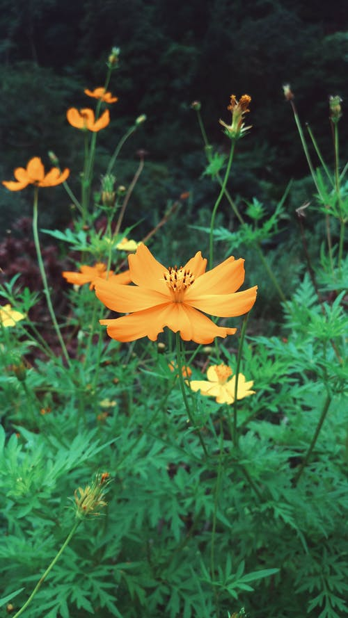 Free stock photo of Baguio, flower, macro photo
