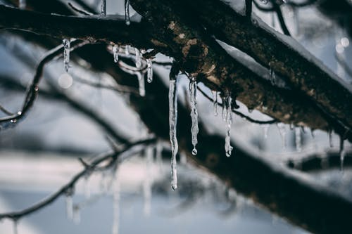 Darmowe zdjęcie z galerii z drewno, drzewo, gałąź, lód