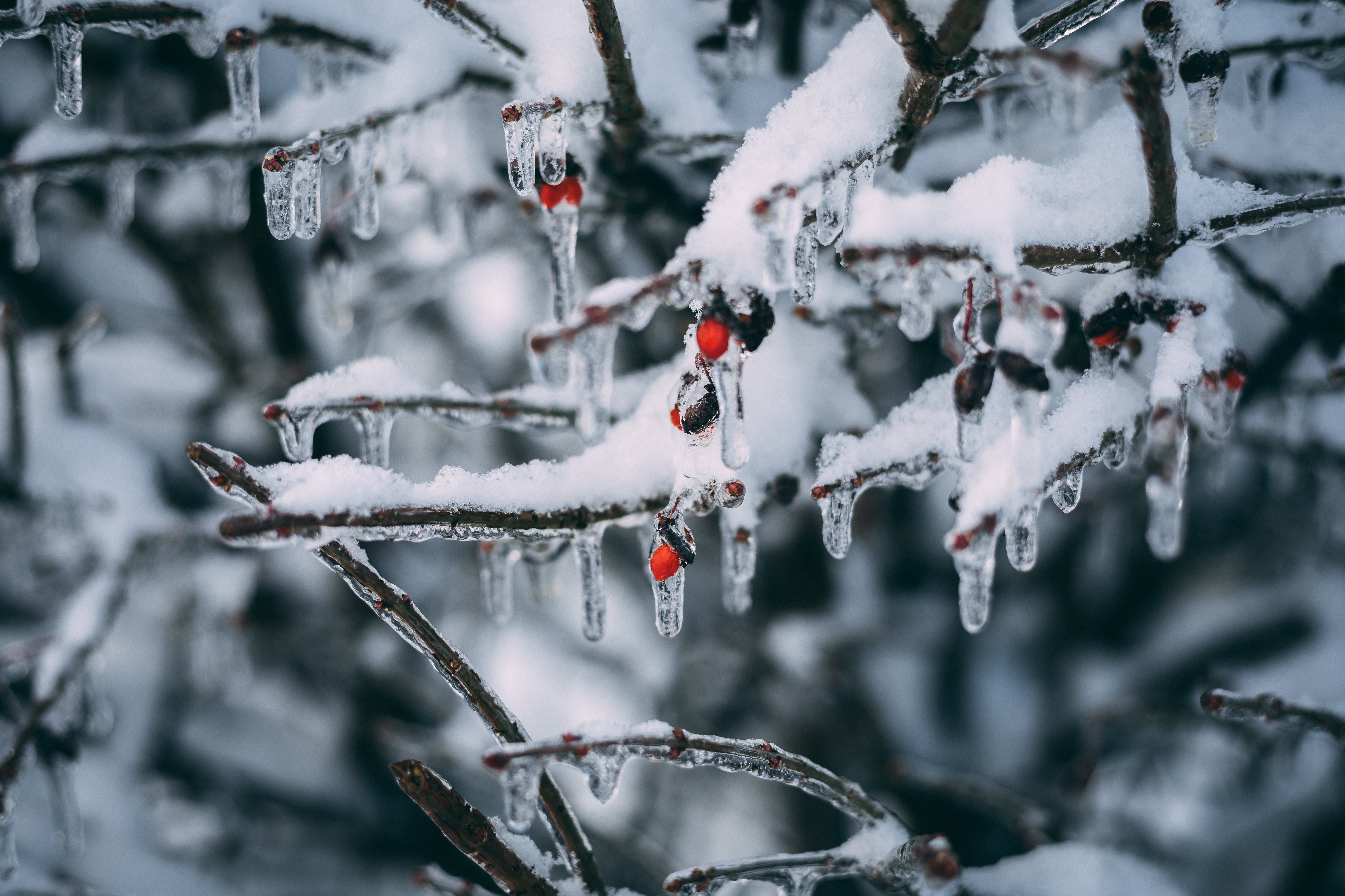 Ice on the Tree Branch