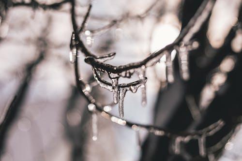 Imagine de stoc gratuită din arbore, congelat, de gheață, fotografie de aproape