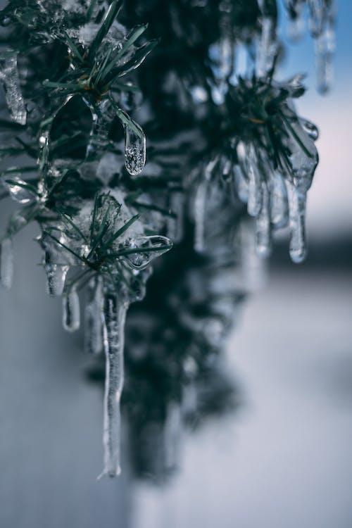 Imagine de stoc gratuită din albastru, frig, gheață, iarnă