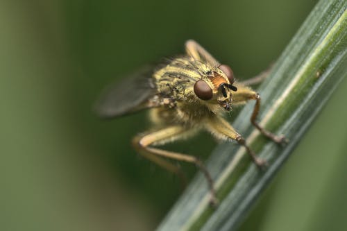 Macro Shot of a Fly