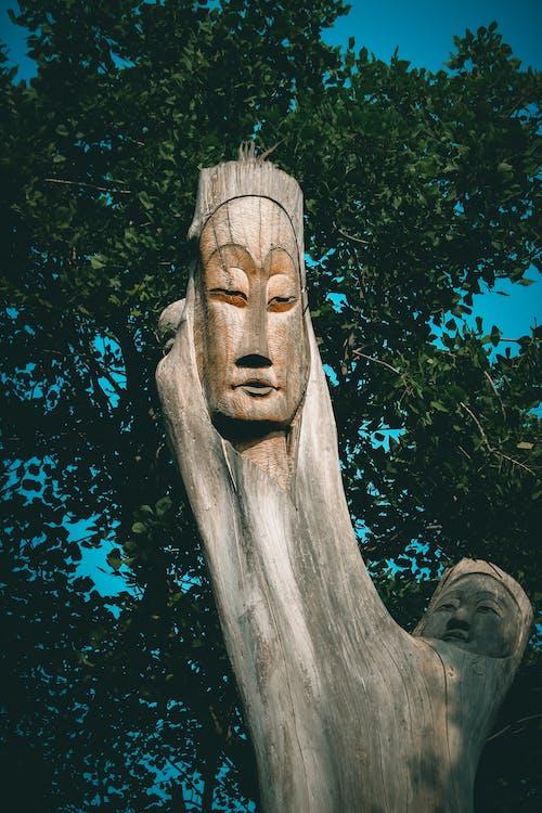 Δωρεάν στοκ φωτογραφιών με δέντρα δημιουργία, δέντρο, δέντρο τέχνη