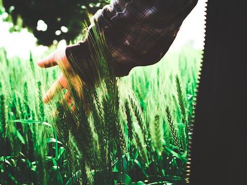 alan, aşındırmak, bitkiler, buğday içeren Ücretsiz stok fotoğraf